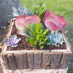 Mixed Succulent Planter