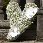 Gypsophila Sweeping Heart
