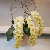 Large Faux Green Orchid Display