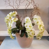 Extra Large Faux Green Orchid Display