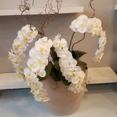Extra Large Faux White Orchid Display