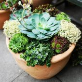 Luxury Outdoor Succulent Planter
